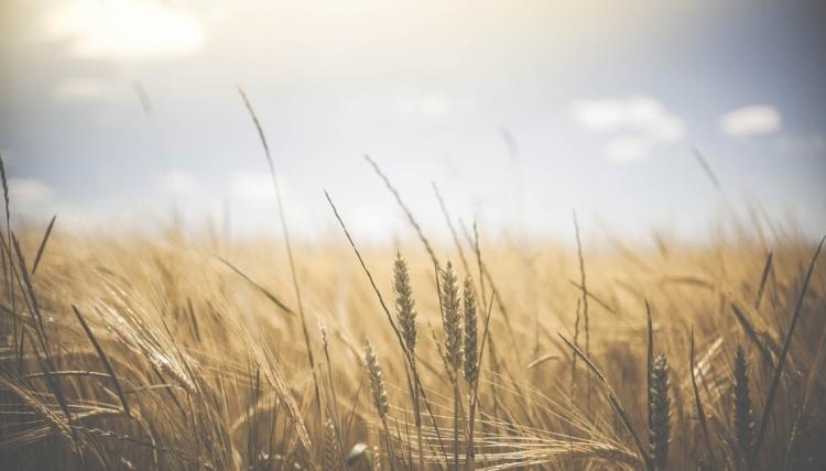 Feriebyggeri på landbrugsejendomme