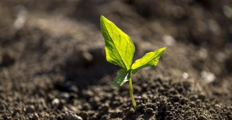 Priser på landbrugsejendomme og jordarealer 2021-2030